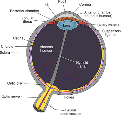 Diagram of an eye.
